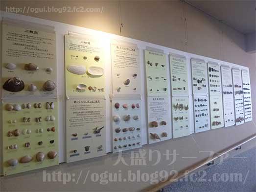 館山渚の駅たてやま海辺の広場渚の博物館011