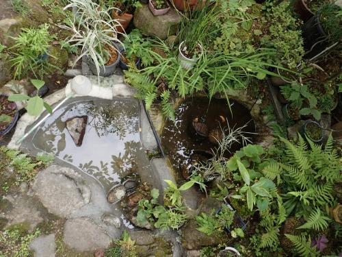 池補修完了