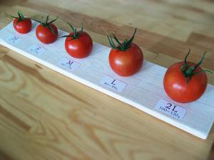 変形トマト1