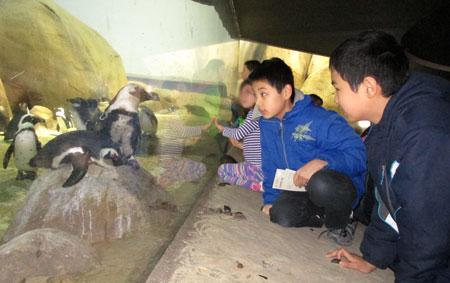 zoo12291401.jpg