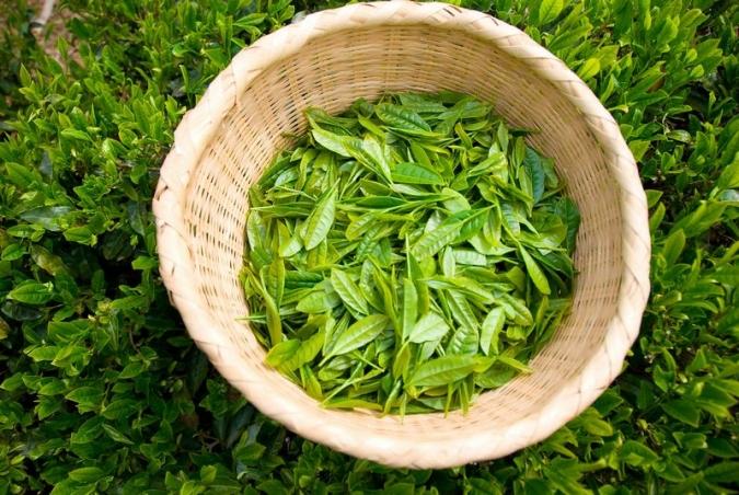 tea7656.jpg