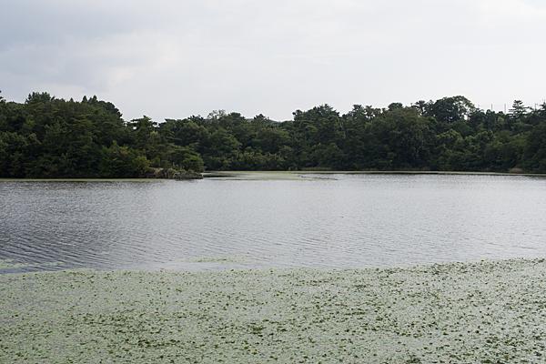 牧野が池-1