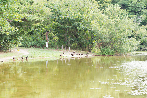 牧野が池-7