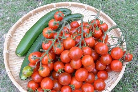 ミニトマトどっさり