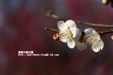EOS6D_2015_02_28_9999_48.jpg