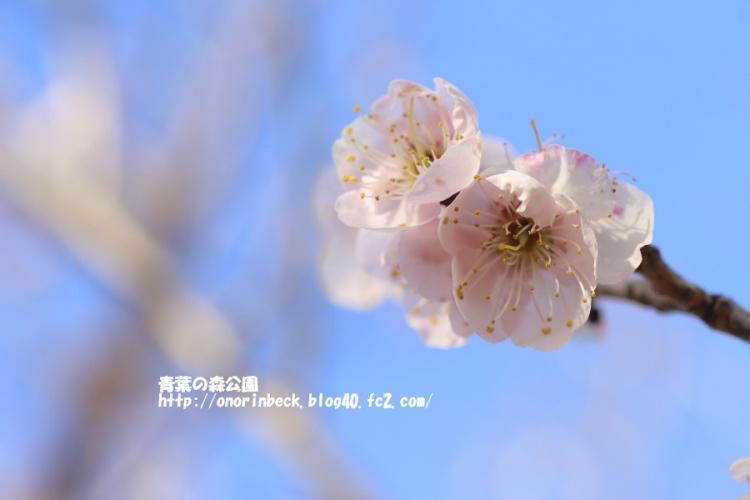 EOS6D_2015_02_28_9999_72.jpg