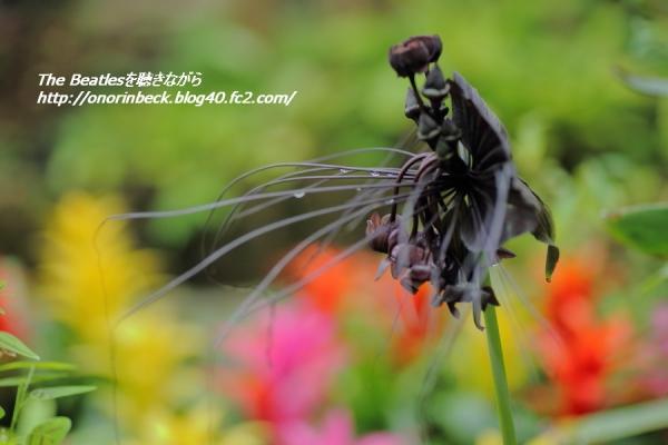 IMG6D_2015_07_05_3397.jpg