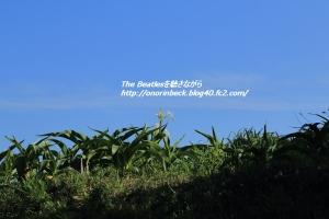 IMG6D_2015_07_20_5023.jpg