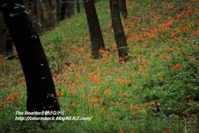 IMG6D_2015_08_12_8230.jpg