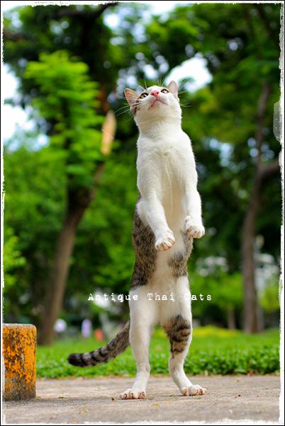 野良猫 Stray cats แมวจรจัด ヲソト猫 タイ Thai ไทย ルンピニ公園 Lumpini park สวนลุมพินี