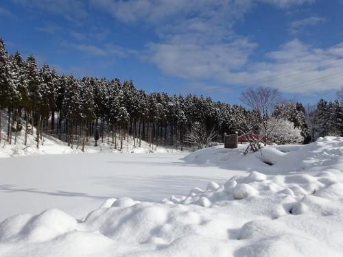 2015年1月29日②_1