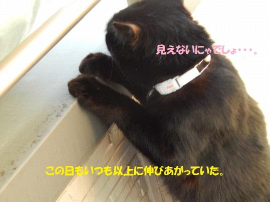 20150129-03.jpg
