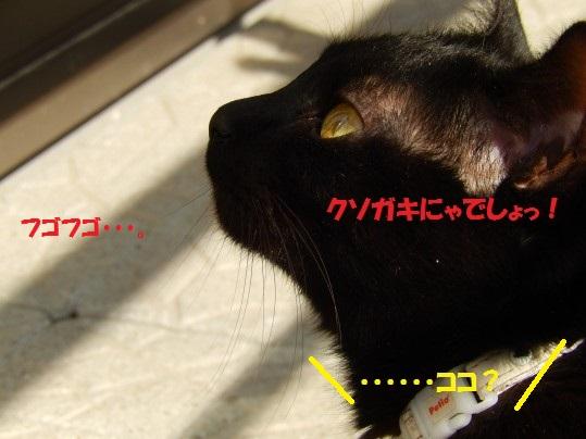20150305-09.jpg