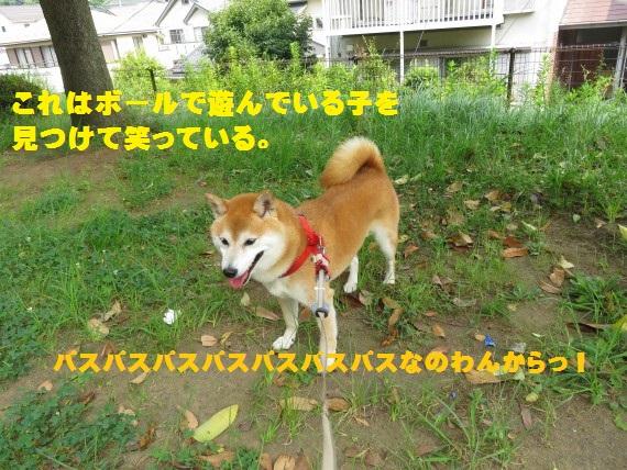 20150819-01.jpg