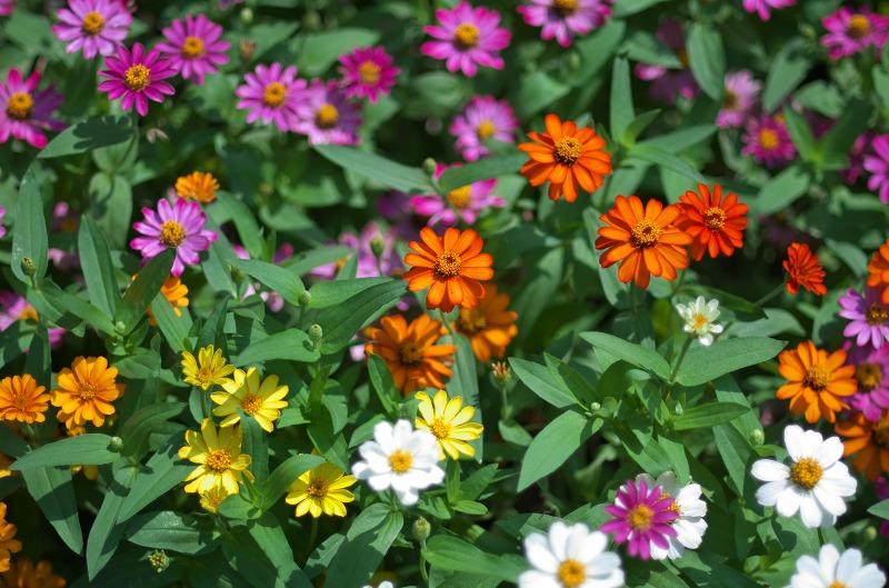 明石海峡公園 夏の花