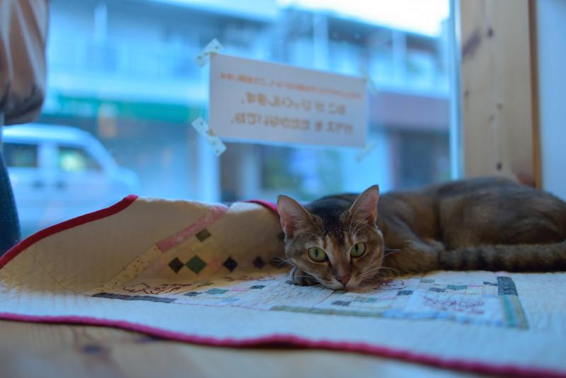 猫 猫カフェ てんてん 大阪