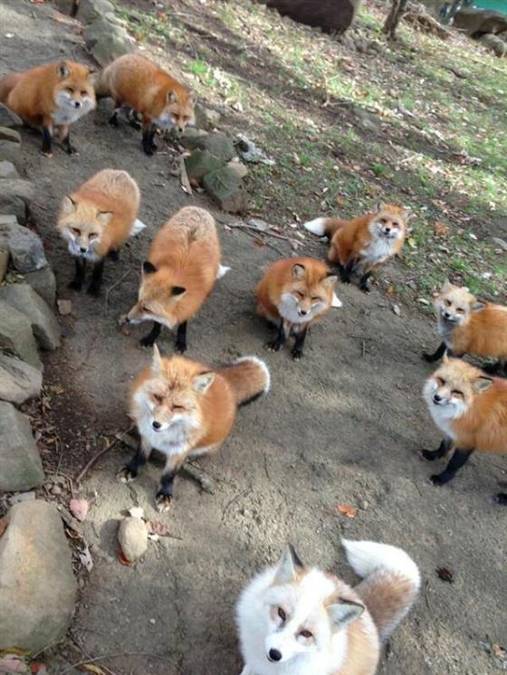 foxvil_s2.jpg