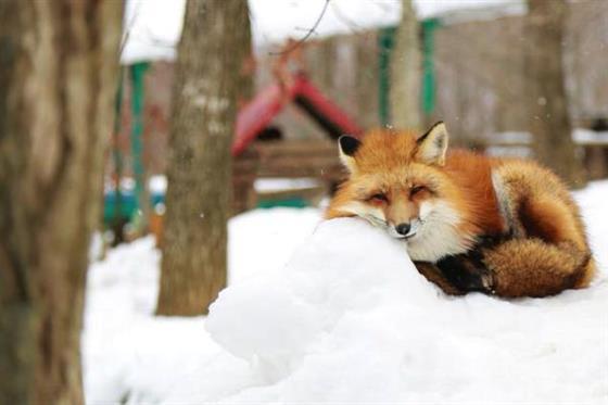 foxvil_s4.jpg