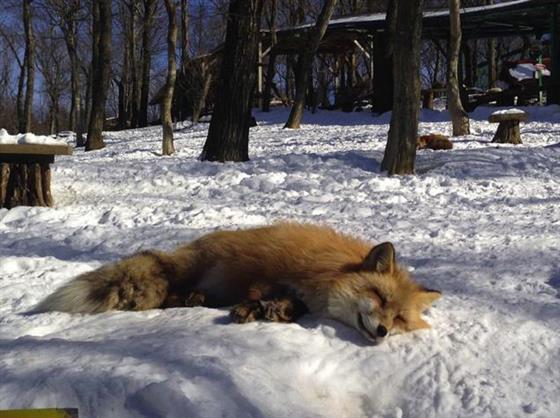 foxvil_s8.jpg