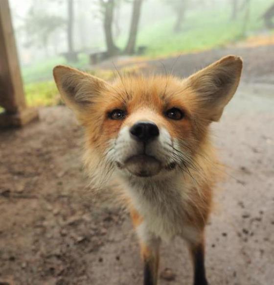 foxvil_s9.jpg