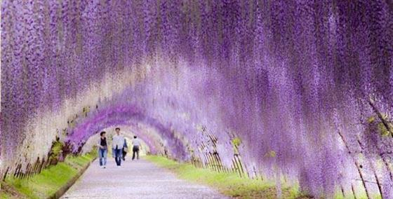 kawachifuji_s1.jpg