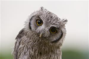 owlcat_s0.jpg
