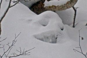 snowmons_s0.jpg