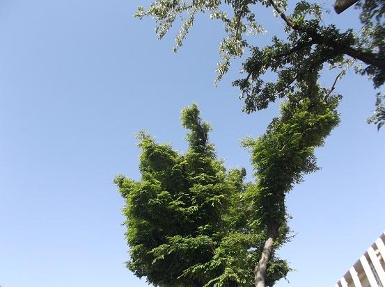 樹1013