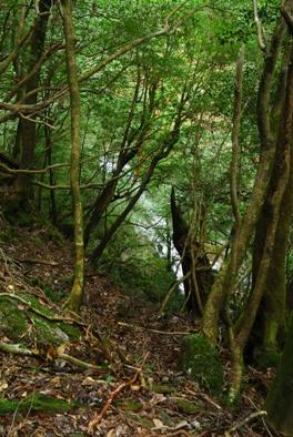 屋久白谷31白谷二条滝