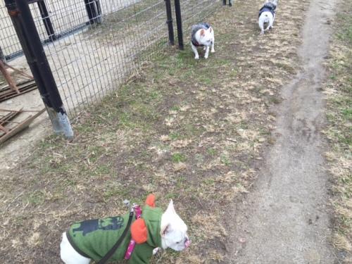 野球場の周りを歩く