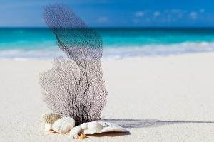 beach-84565_1280.jpg
