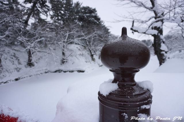 hirosaki1501-0007.jpg