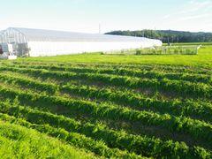 [写真]草刈りが終わったばかりの農園内の土手の様子