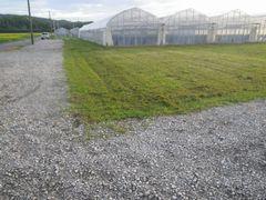 [写真]草刈りを終えたばかりの駐車場近くの芝生の様子