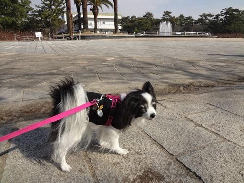 浜寺公園にきました~