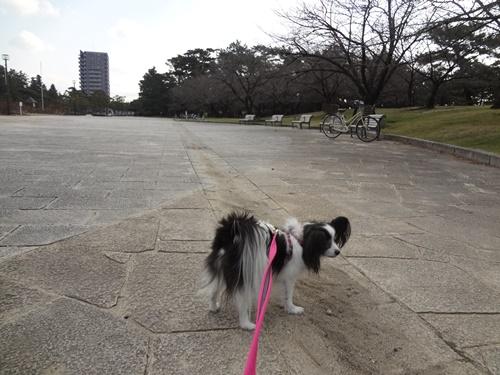 公園に寄り道