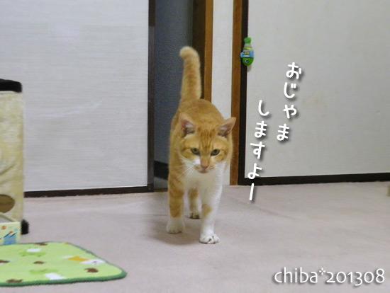 chiba15-08-23.jpg