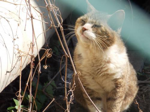 野良猫2+030_convert_20150214235056