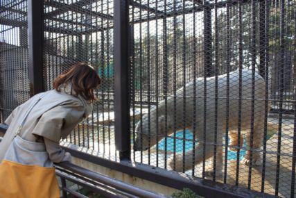 201501姫路動物園白熊2 (1)