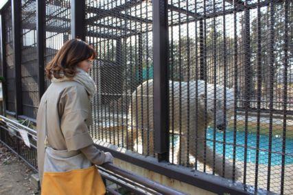 201501姫路動物園白熊2 (2)