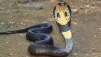 G3蛇別跑