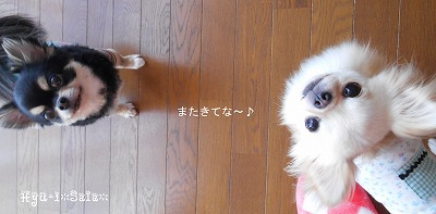 ・∀・Hyu-i*Sala・∀・