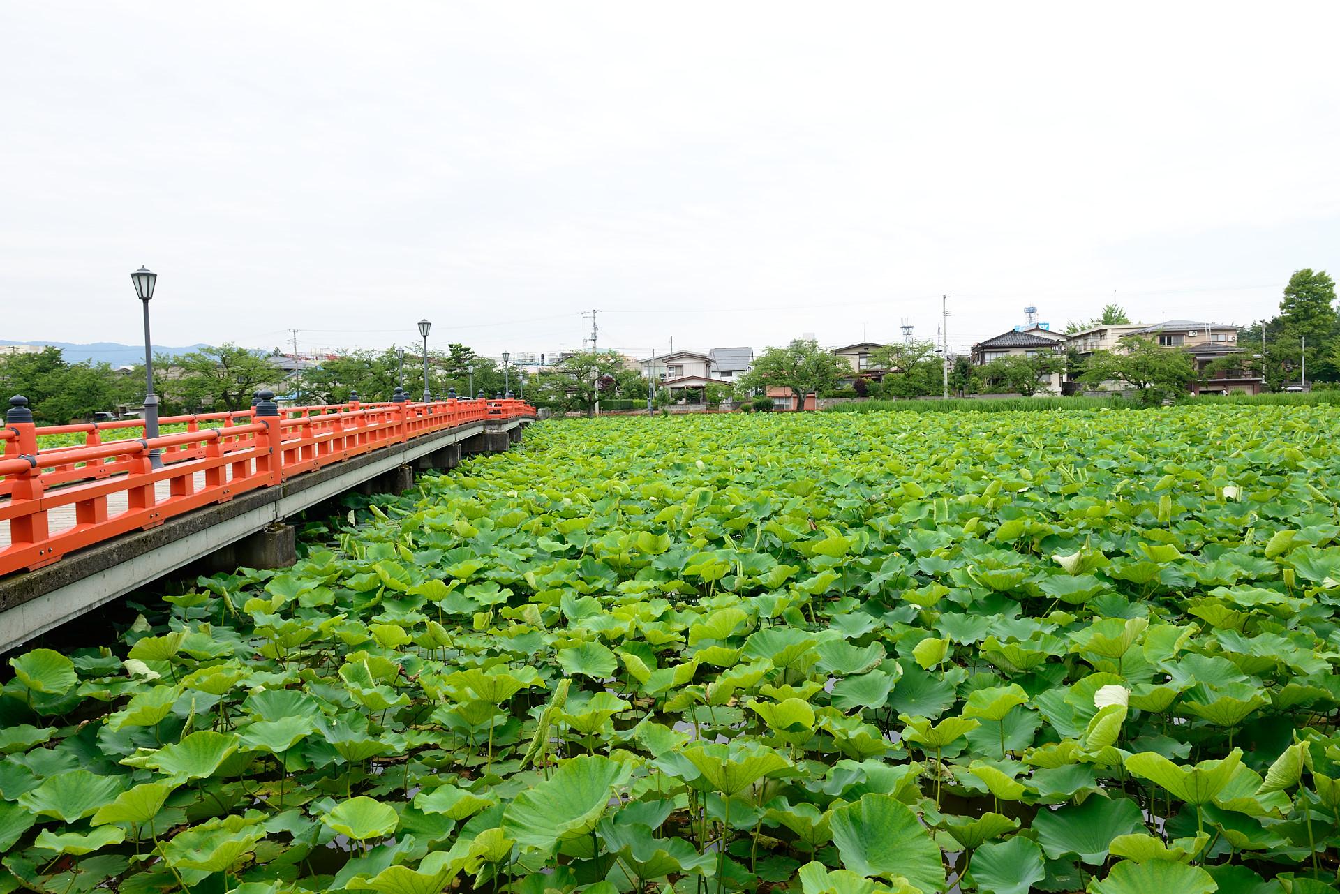 高田公園_006
