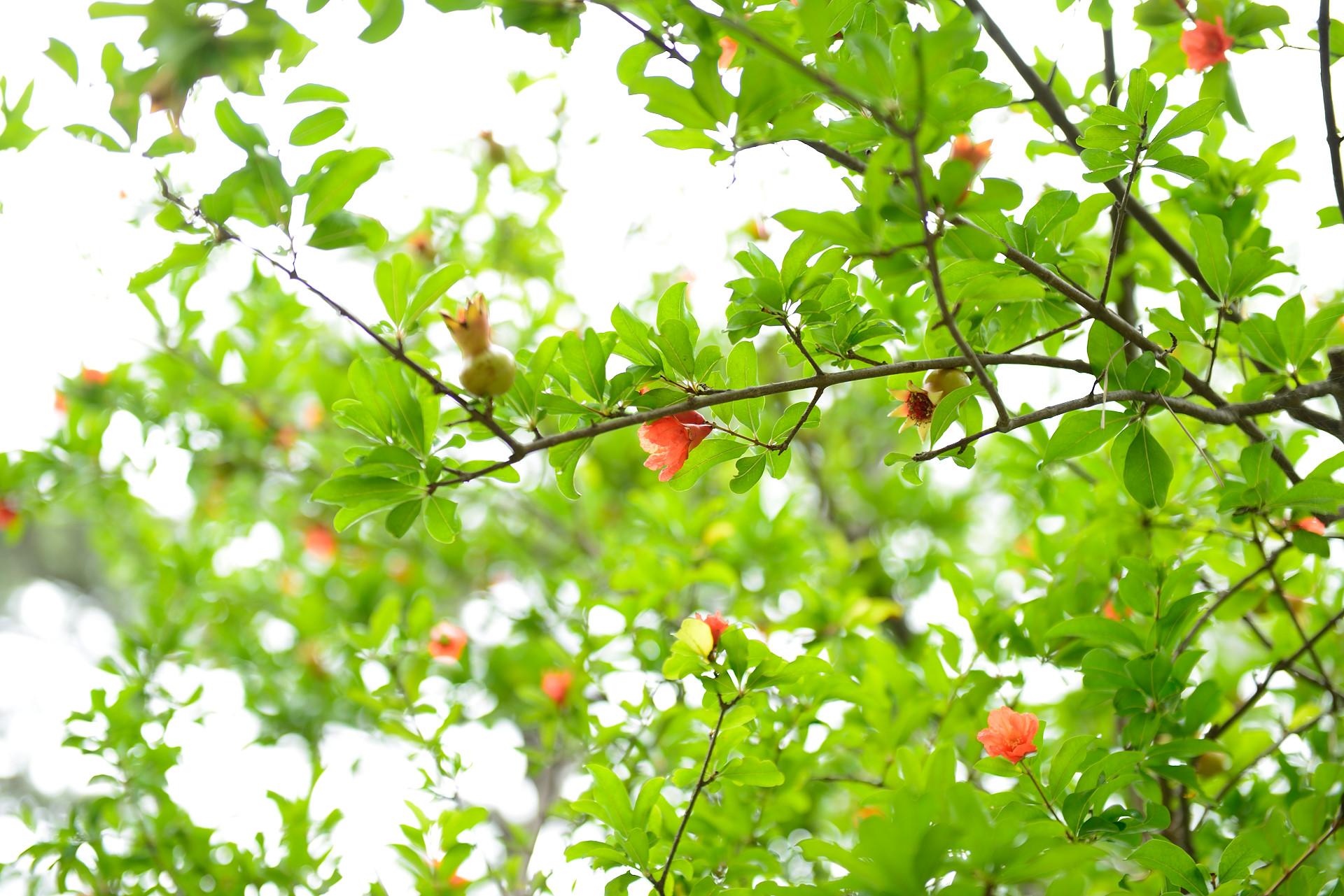 高田公園_008