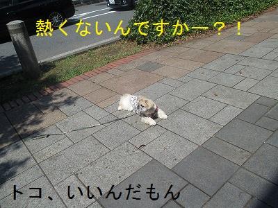 20150815 (9)