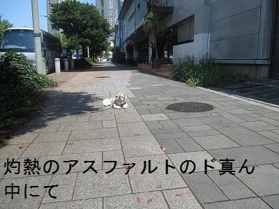 20150815 (10)