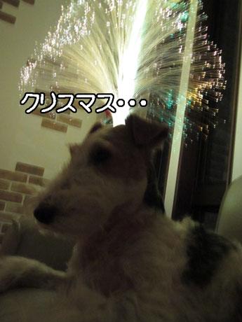 1_20141223212242bc2.jpg