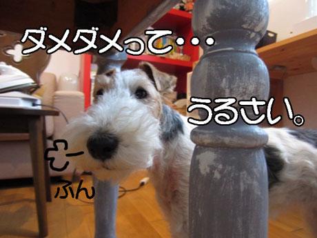 3_20141220160611ffe.jpg