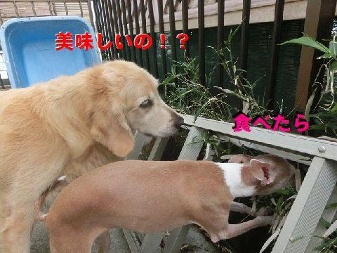 f_20150819234721c77.jpg