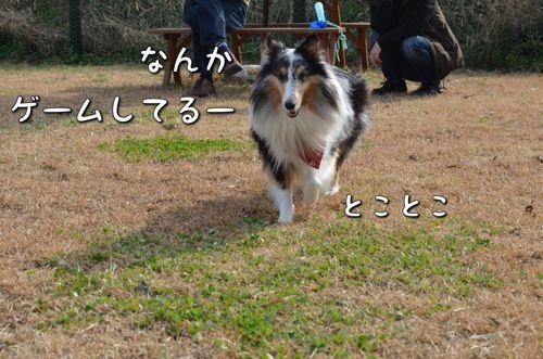 IMG_3253_2.jpg